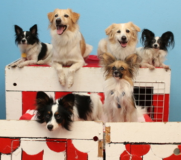 Sure, they look happy now, but wait until the puppies get in trouble and wind up in Time Out.