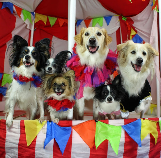 Here are the dogs of Circus Chickendog!