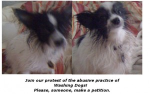 The dogs are now washed, but they are organizing a protest. They would appreciate your support.